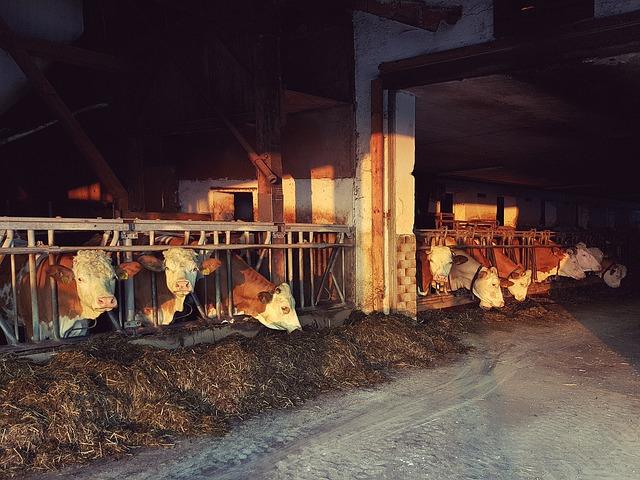 recouvrement de creance warrant cheptel lait cession créance prime PAC